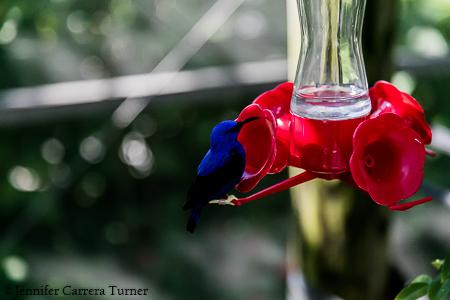 nature-garden-photography-10
