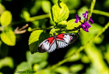 nature-garden-photography-14