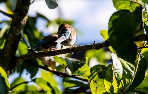 nature-garden-photography-9